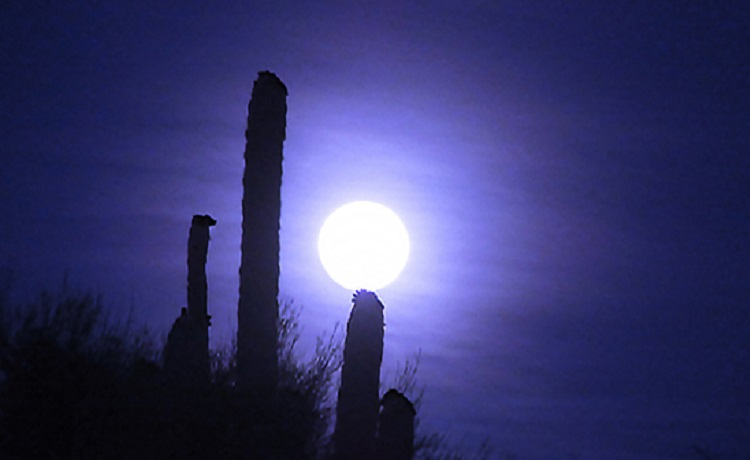 Holiday Hikes Under the Full Moon!